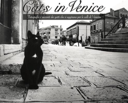 Marianna Zampieri Cats in Venice Galleria la Storta Venezia_1