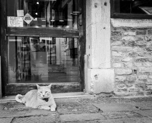 Marianna Zampieri Cats in Venice Galleria la Storta Venezia_3