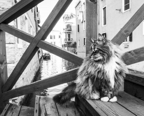 Marianna Zampieri Cats in Venice Galleria la Storta Venezia_6